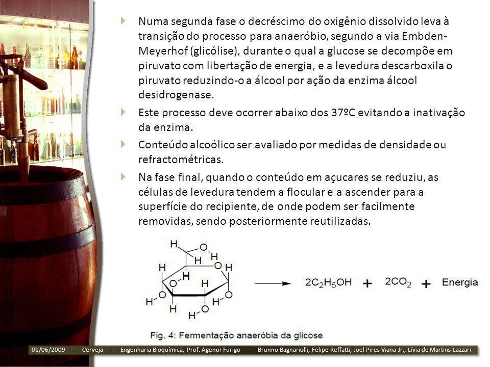 Numa segunda fase o decréscimo do oxigênio dissolvido leva à transição do processo para anaeróbio, segundo a via Embden-Meyerhof (glicólise), durante o qual a glucose se decompõe em piruvato com libertação de energia, e a levedura descarboxila o piruvato reduzindo-o a álcool por ação da enzima álcool desidrogenase.