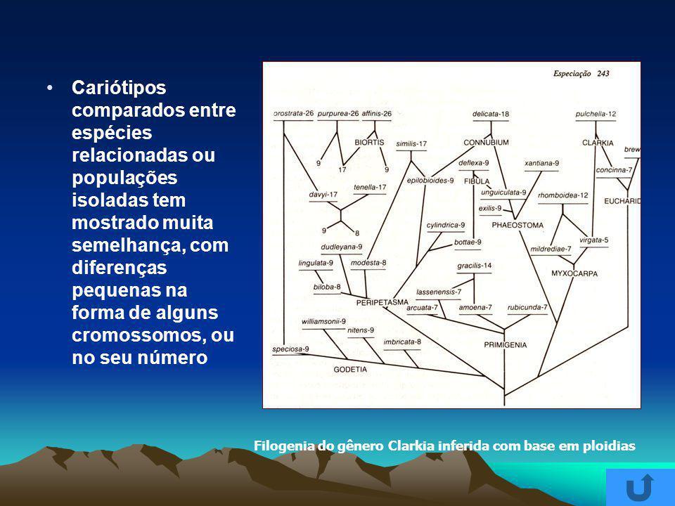 Cariótipos comparados entre espécies relacionadas ou populações isoladas tem mostrado muita semelhança, com diferenças pequenas na forma de alguns cromossomos, ou no seu número