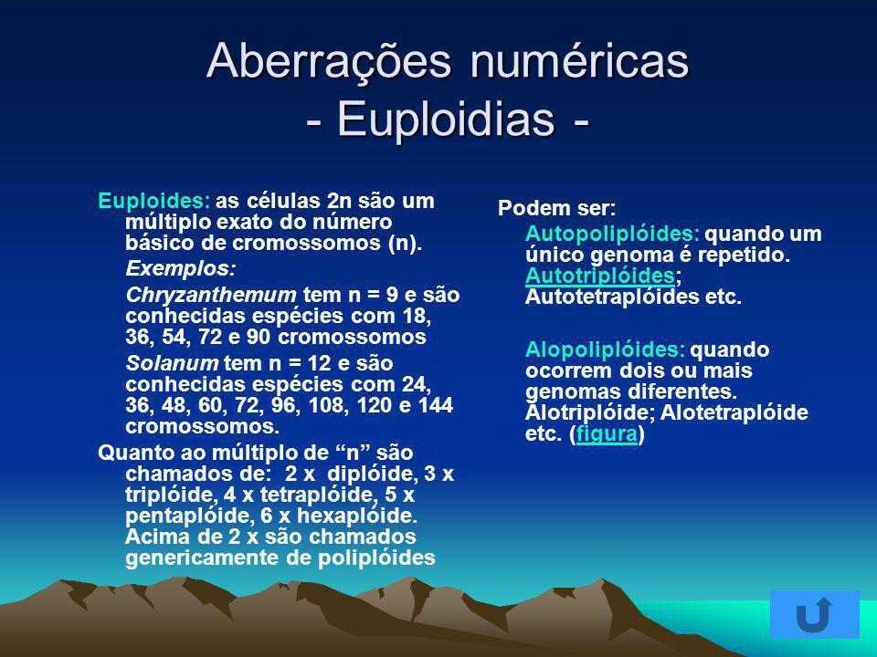 Aberrações numéricas - Euploidias -
