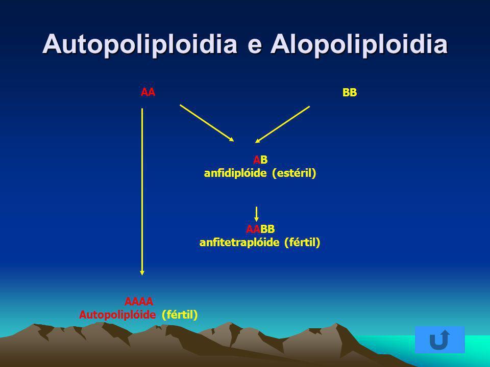 Autopoliploidia e Alopoliploidia