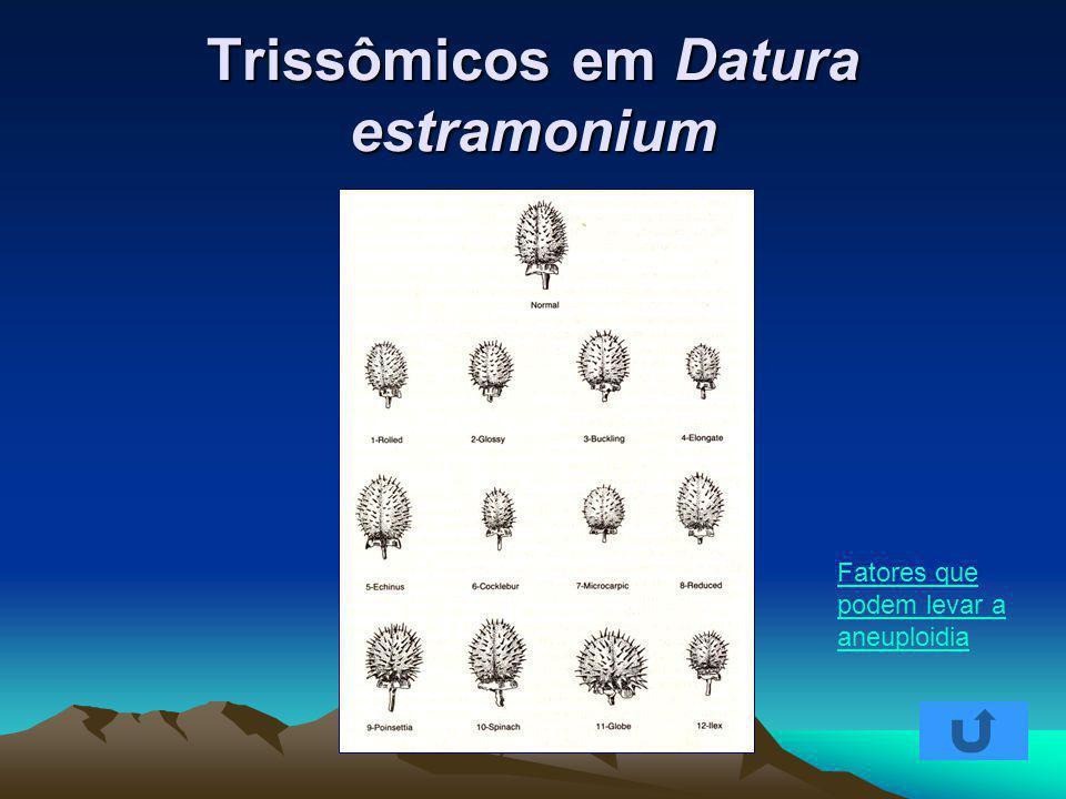 Trissômicos em Datura estramonium