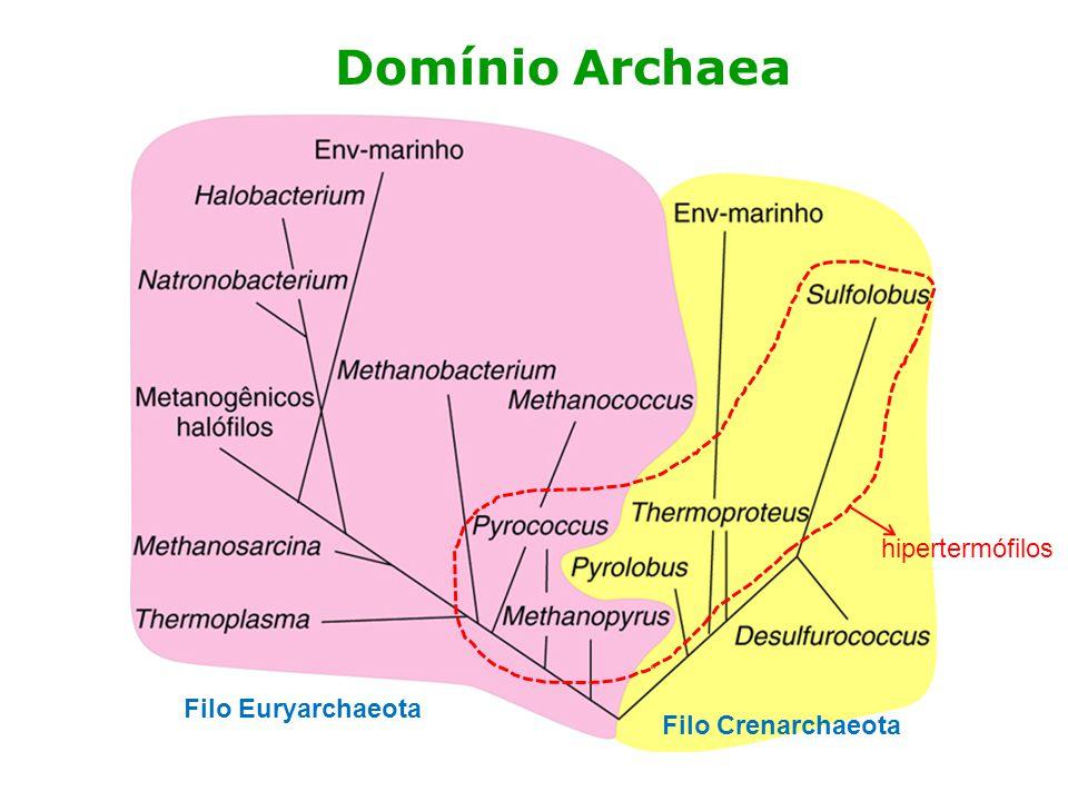 Domínio Archaea hipertermófilos Filo Euryarchaeota Filo Crenarchaeota