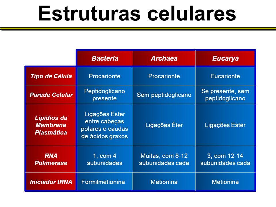 Estruturas celulares Eucarya Archaea Bacteria Metionina