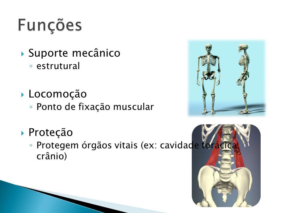 Funções Suporte mecânico Locomoção Proteção estrutural