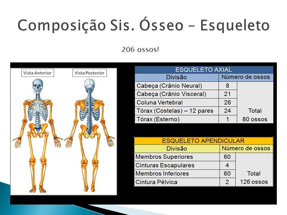 Composição Sis. Ósseo – Esqueleto