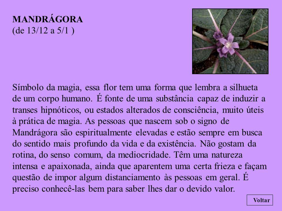 MANDRÁGORA (de 13/12 a 5/1 )