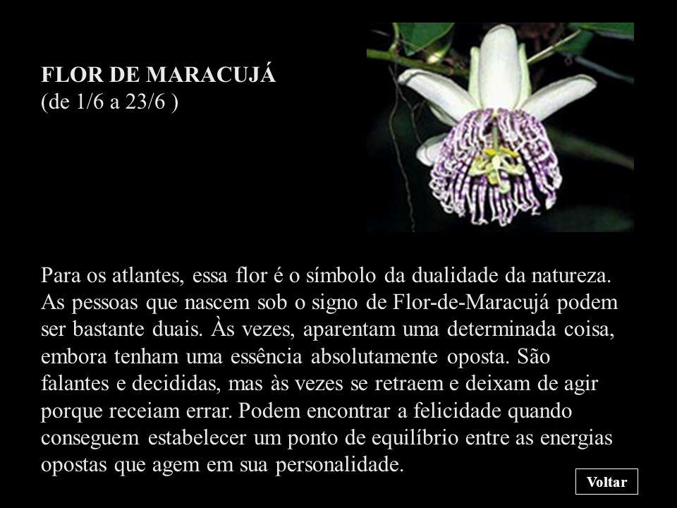 FLOR DE MARACUJÁ (de 1/6 a 23/6 )