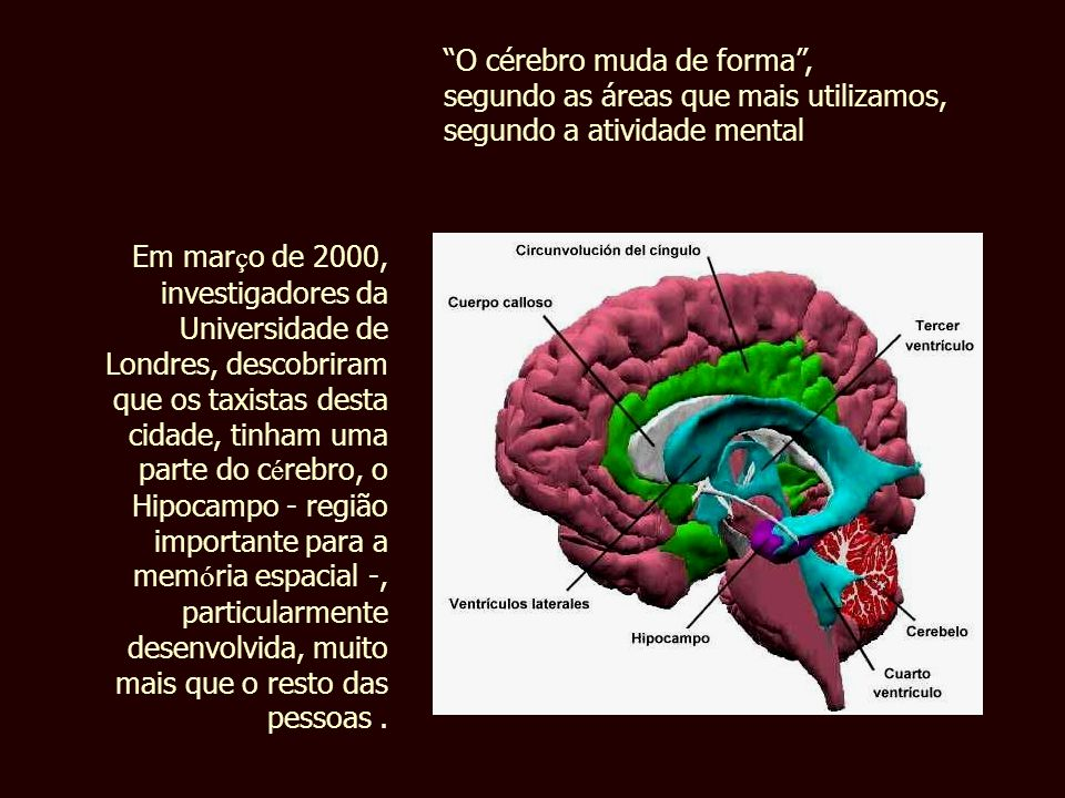 O cérebro muda de forma ,