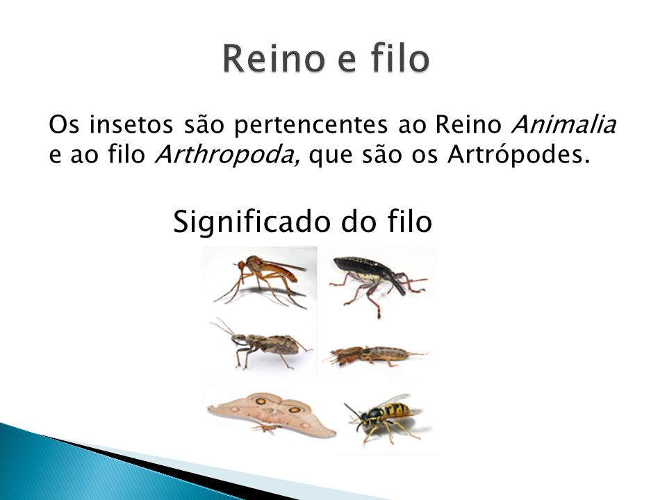 Reino e filo Significado do filo