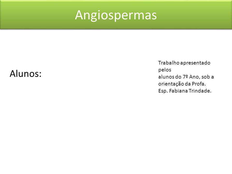 Angiospermas Alunos: Trabalho apresentado pelos alunos do 7º Ano, sob a orientação da Profa.
