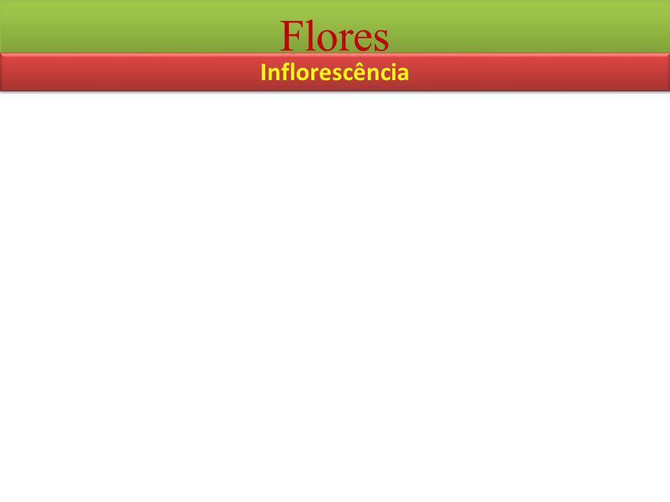 Flores Inflorescência