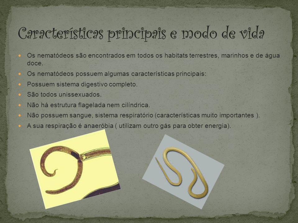 Características principais e modo de vida