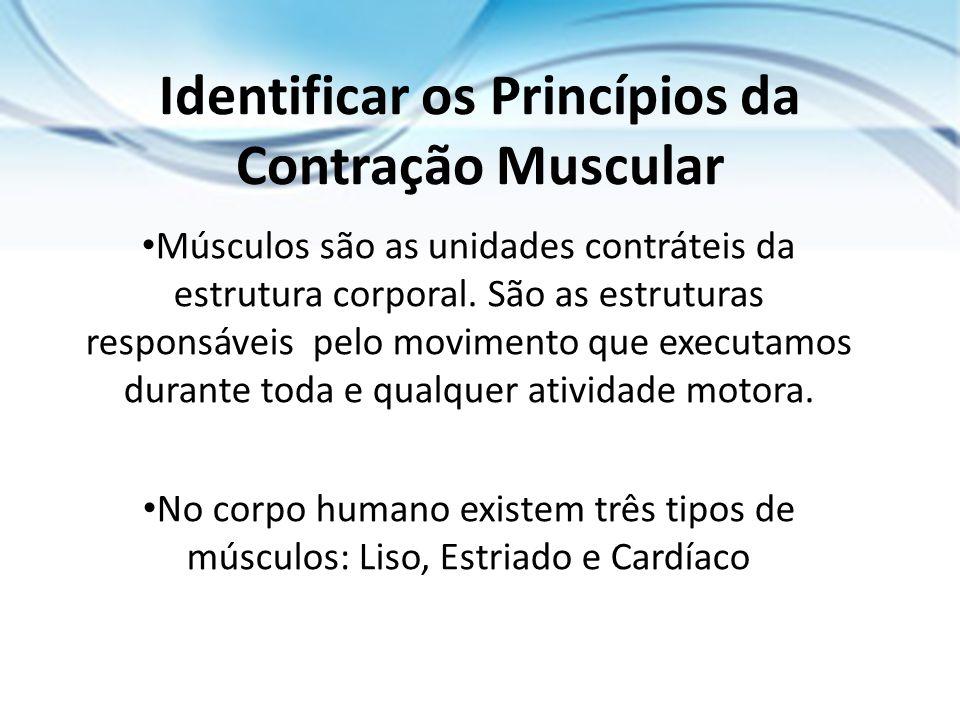 Identificar os Princípios da Contração Muscular
