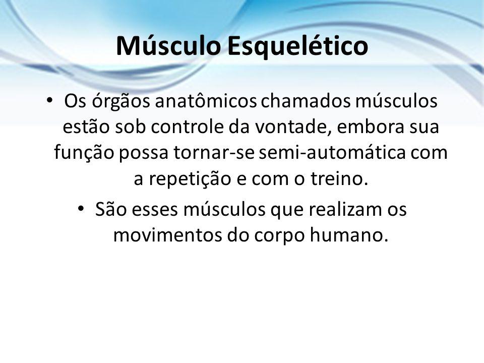 São esses músculos que realizam os movimentos do corpo humano.