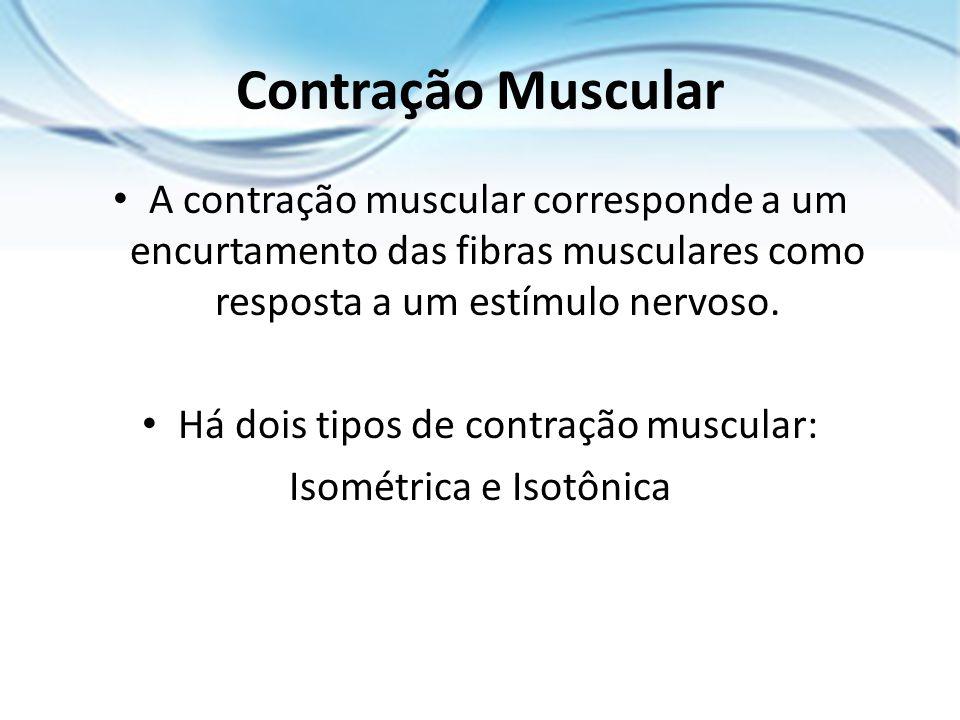 Contração Muscular A contração muscular corresponde a um encurtamento das fibras musculares como resposta a um estímulo nervoso.