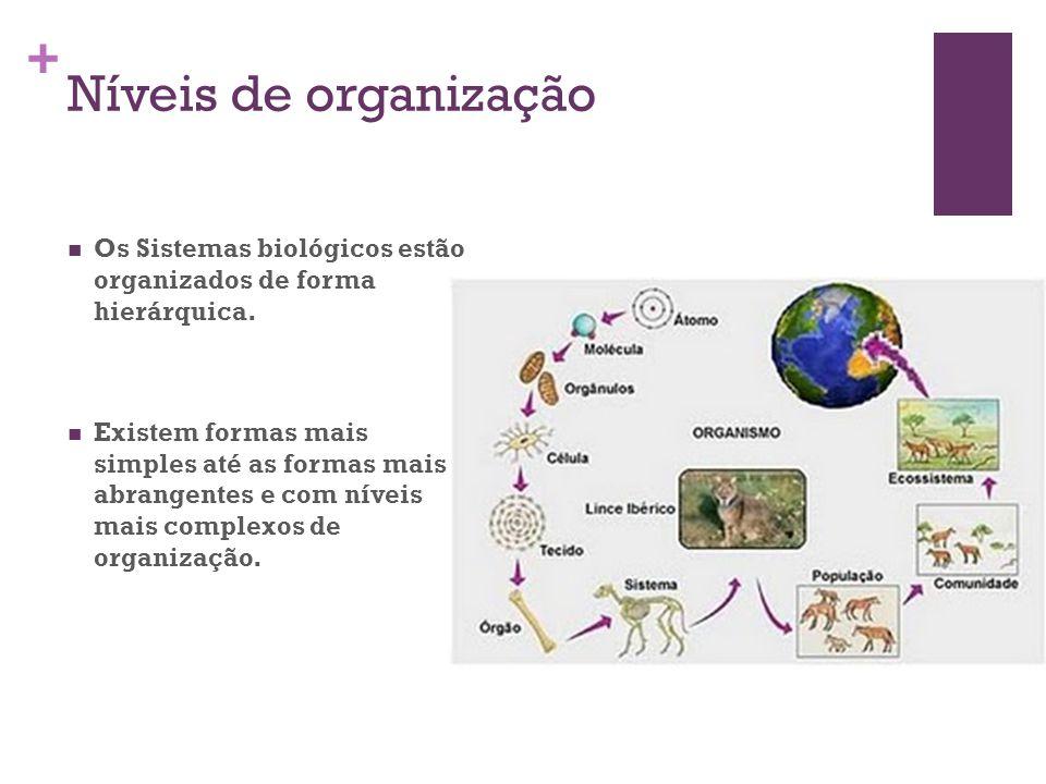 Níveis de organização Os Sistemas biológicos estão organizados de forma hierárquica.