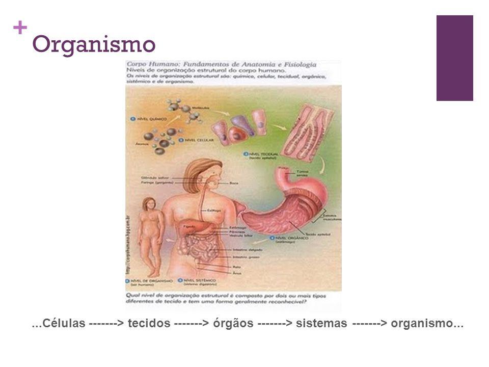 Organismo ...Células -------> tecidos -------> órgãos -------> sistemas -------> organismo...