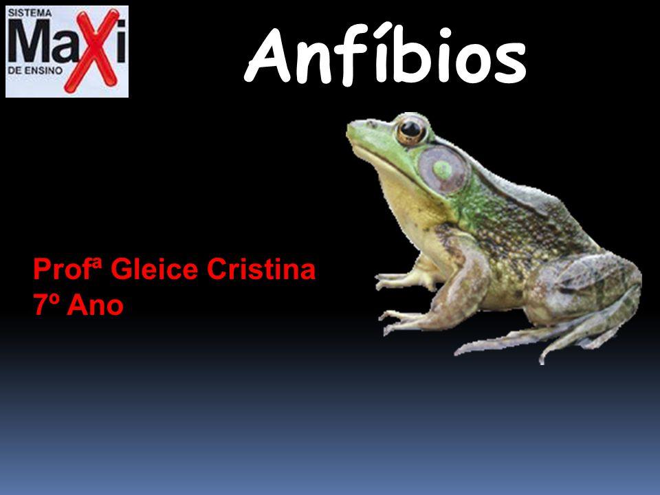 Anfíbios Profª Gleice Cristina 7º Ano