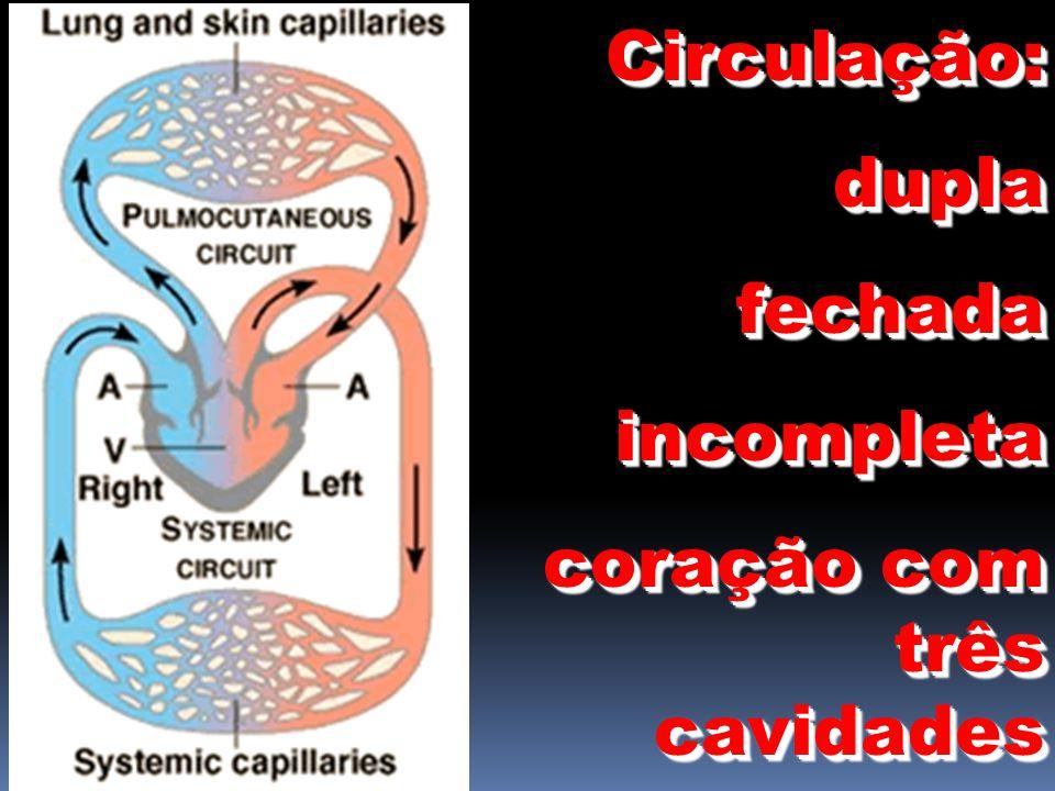 Circulação: dupla fechada incompleta coração com três cavidades