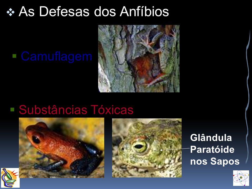 Camuflagem Substâncias Tóxicas As Defesas dos Anfíbios