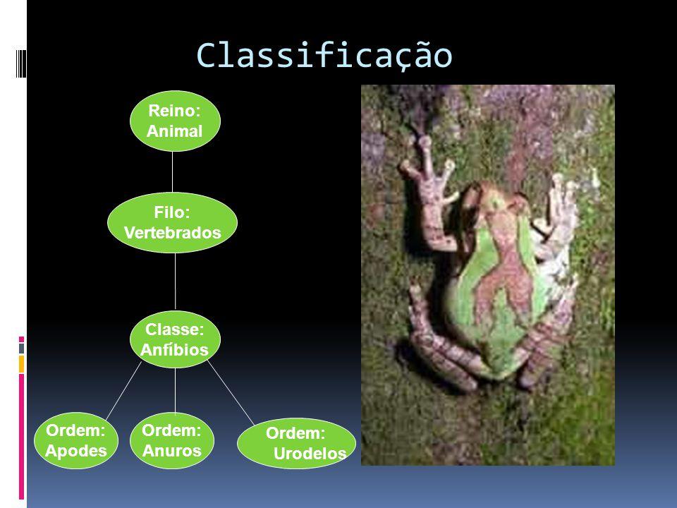 Classificação Reino: Animal Filo: Vertebrados Classe: Anfíbios Ordem: