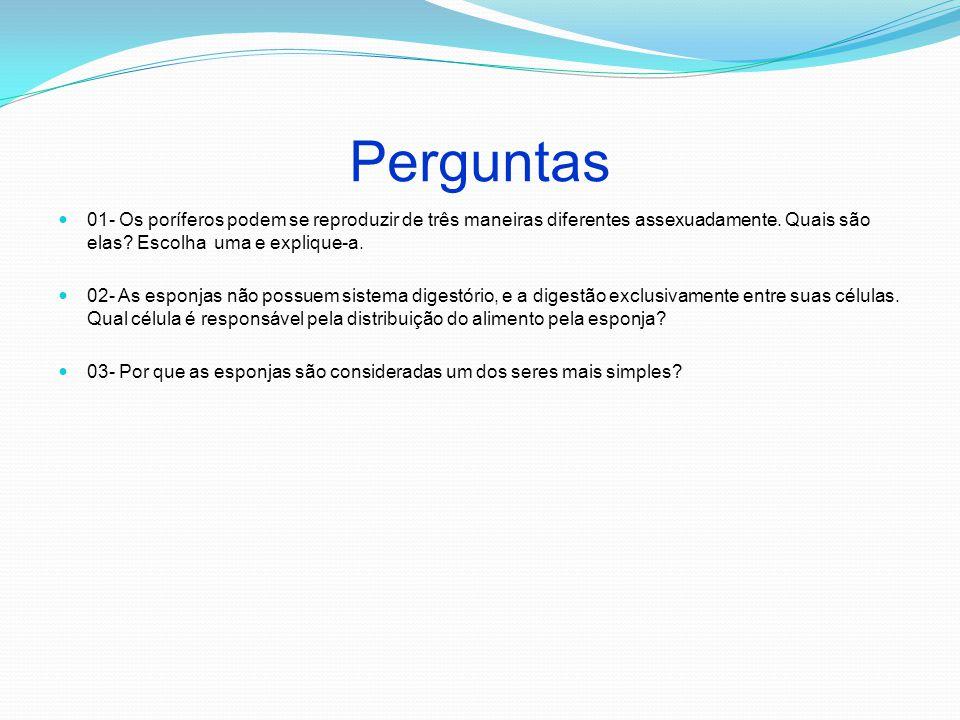 Perguntas 01- Os poríferos podem se reproduzir de três maneiras diferentes assexuadamente. Quais são elas Escolha uma e explique-a.