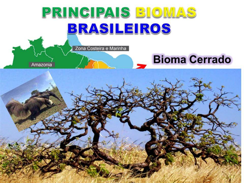 PRINCIPAIS BIOMAS BRASILEIROS