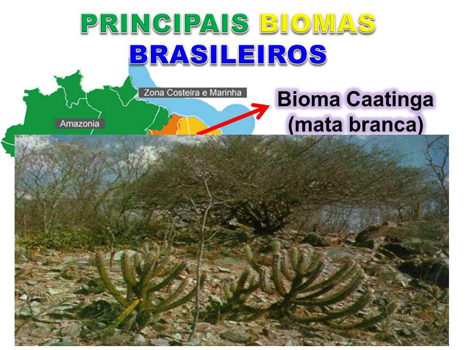 PRINCIPAIS BIOMAS BRASILEIROS Bioma Caatinga (mata branca)