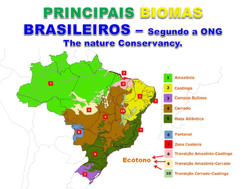 PRINCIPAIS BIOMAS BRASILEIROS – Segundo a ONG The nature Conservancy.