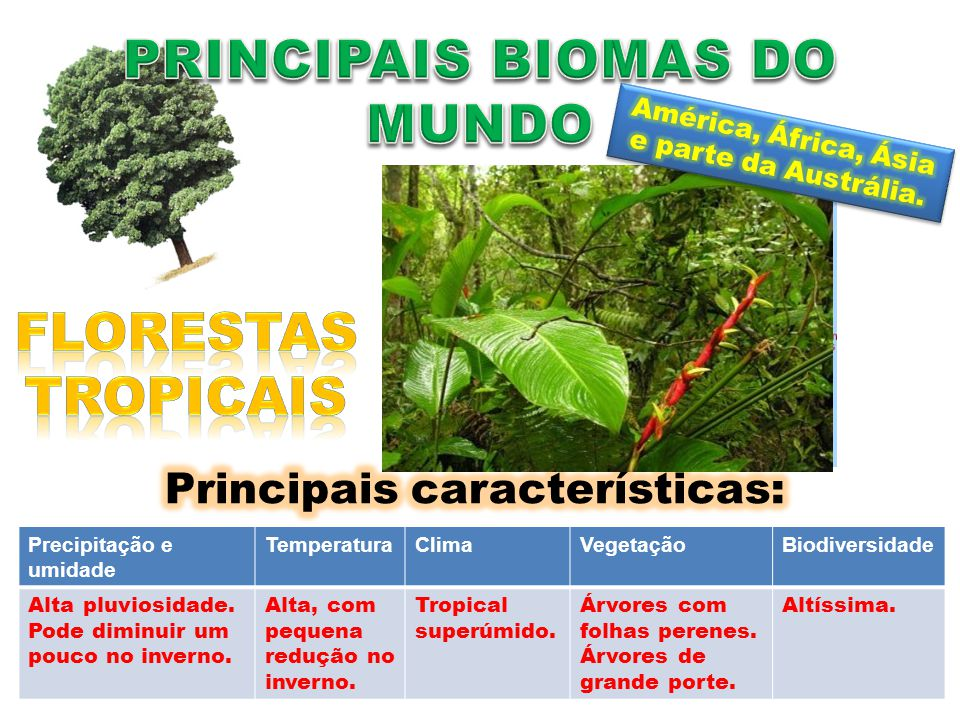 PRINCIPAIS BIOMAS DO MUNDO