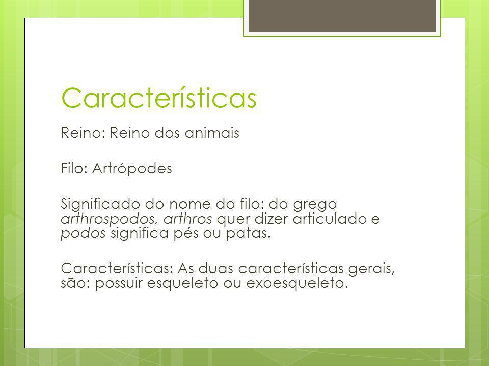Características Reino: Reino dos animais Filo: Artrópodes