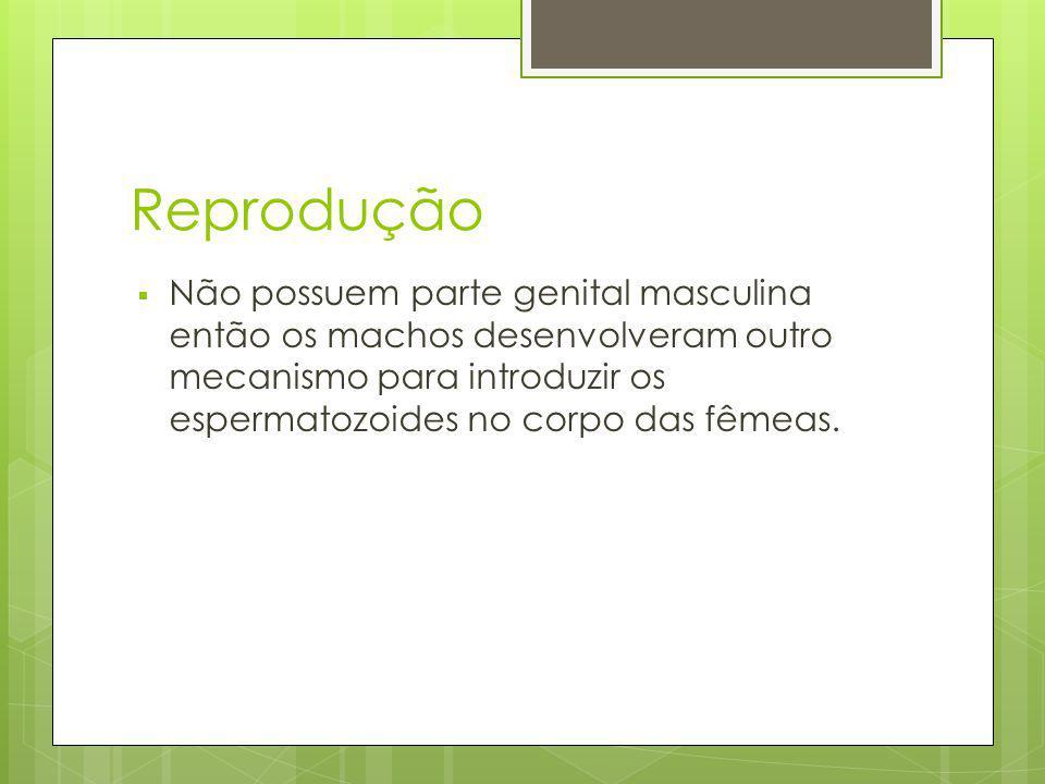 Reprodução Não possuem parte genital masculina então os machos desenvolveram outro mecanismo para introduzir os espermatozoides no corpo das fêmeas.
