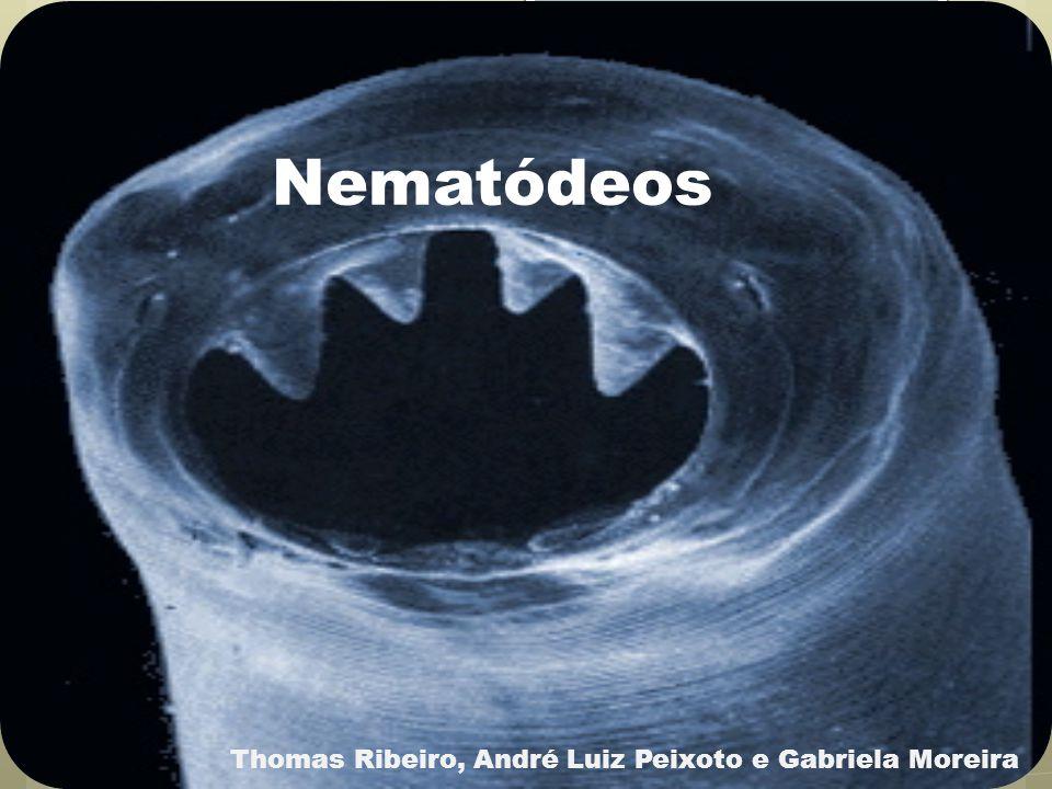 Nematódeos Thomas Ribeiro, André Luiz Peixoto e Gabriela Moreira
