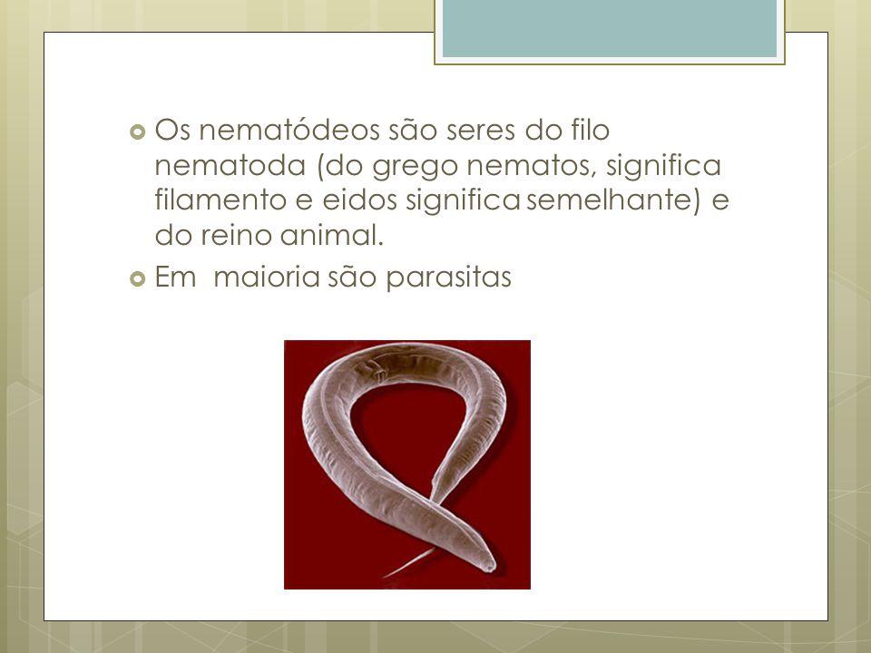 Os nematódeos são seres do filo nematoda (do grego nematos, significa filamento e eidos significa semelhante) e do reino animal.