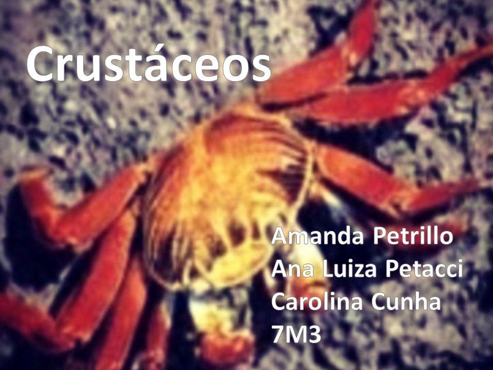 Crustáceos Amanda Petrillo Ana Luiza Petacci Carolina Cunha 7M3
