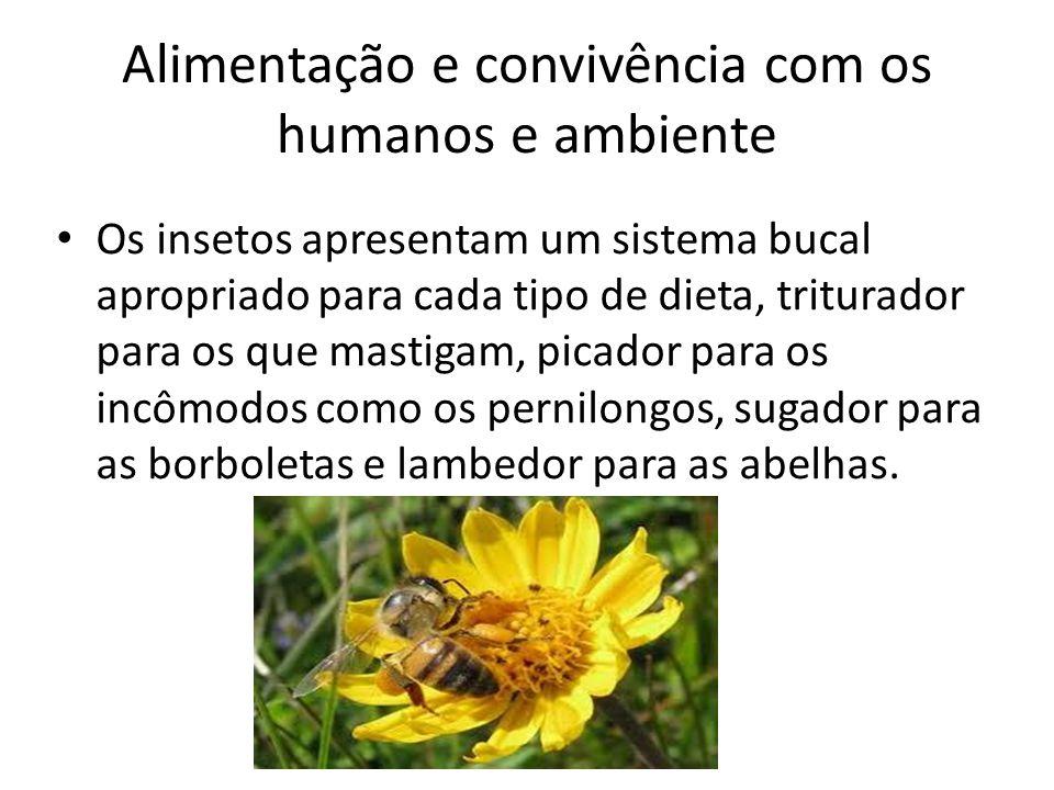 Alimentação e convivência com os humanos e ambiente