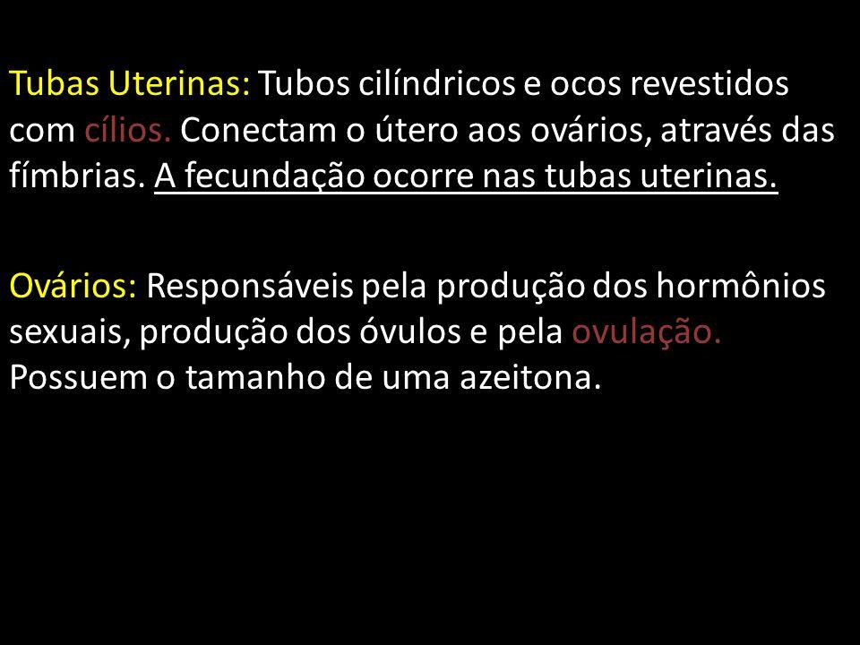 Tubas Uterinas: Tubos cilíndricos e ocos revestidos com cílios