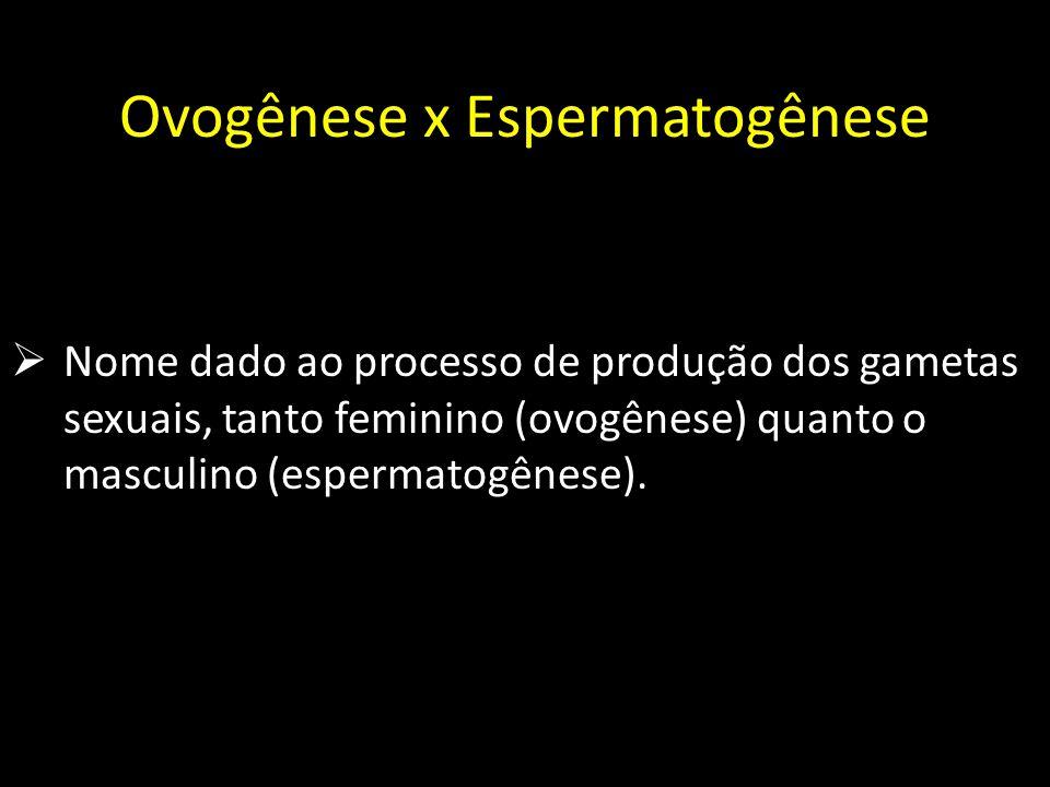 Ovogênese x Espermatogênese