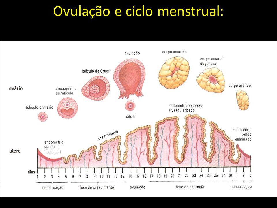 Ovulação e ciclo menstrual: