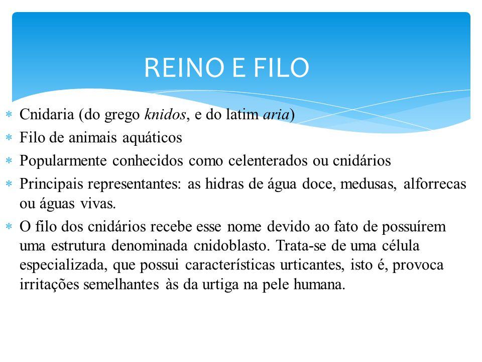 REINO E FILO Cnidaria (do grego knidos, e do latim aria)