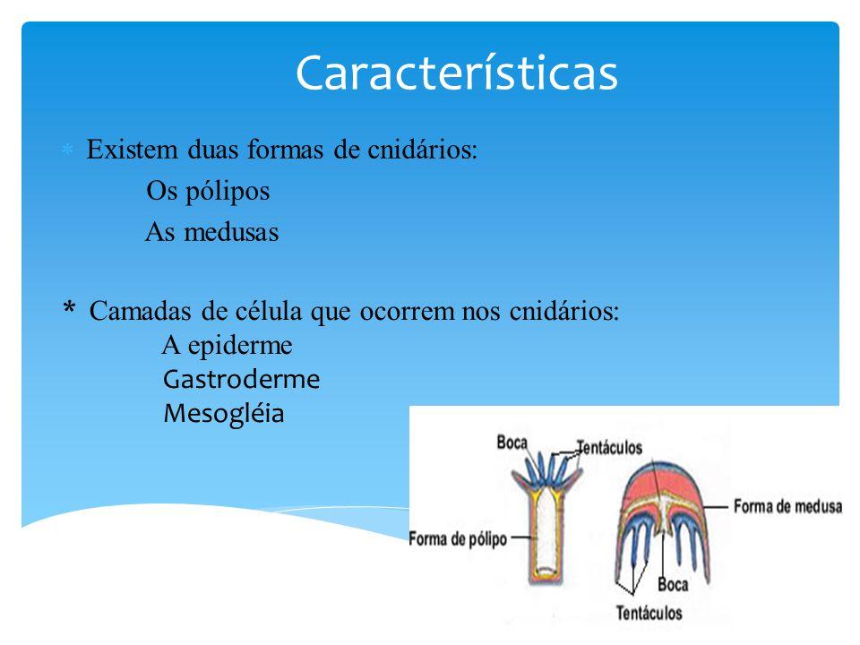 Características Existem duas formas de cnidários: Os pólipos