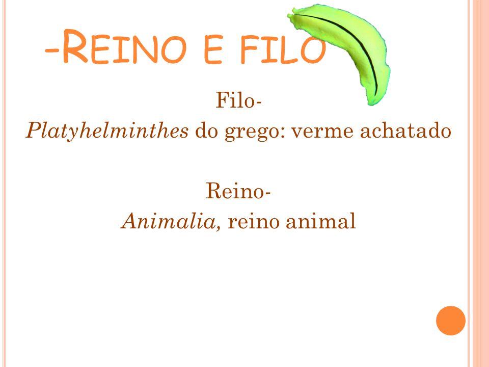 -Reino e filo Filo- Platyhelminthes do grego: verme achatado Reino- Animalia, reino animal
