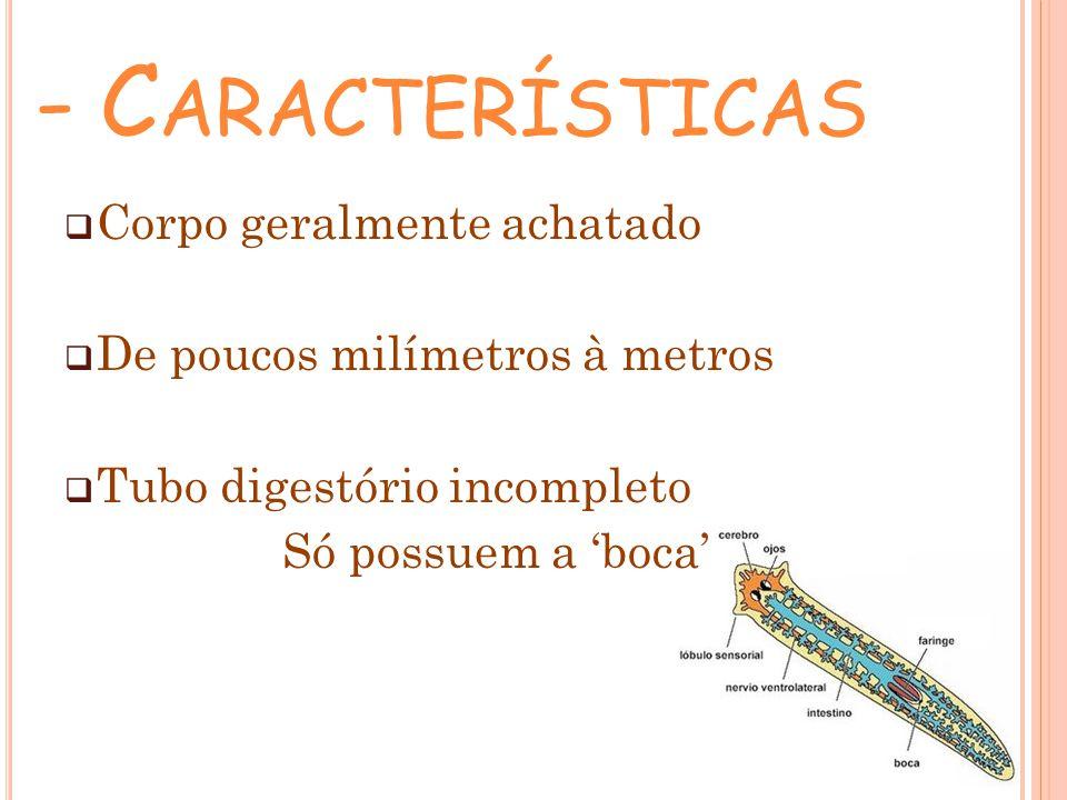 - Características Corpo geralmente achatado