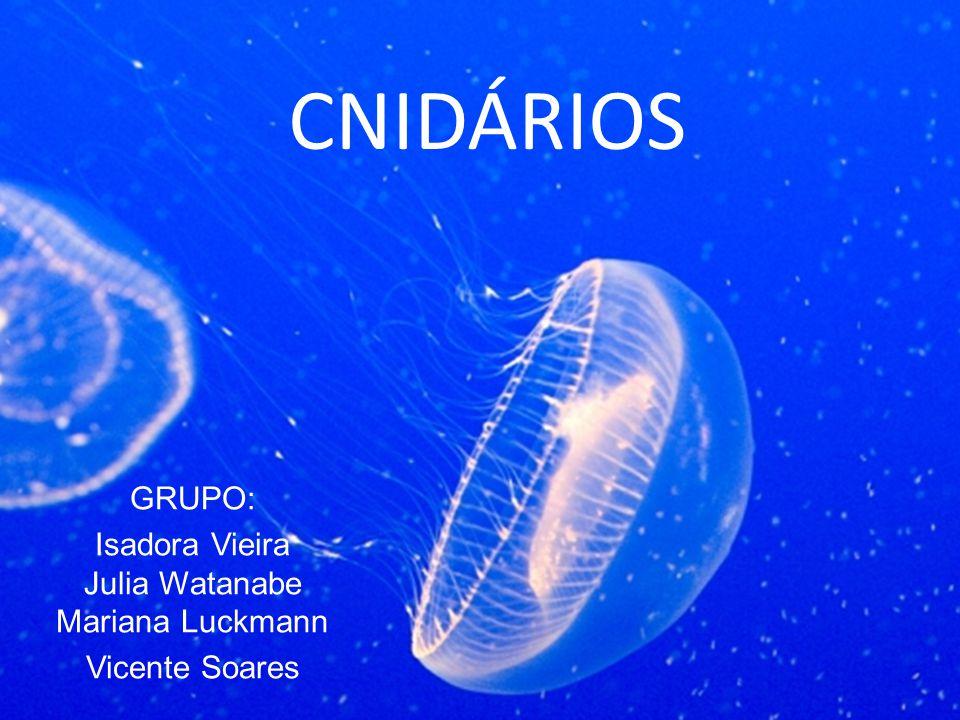 GRUPO: Isadora Vieira Julia Watanabe Mariana Luckmann Vicente Soares