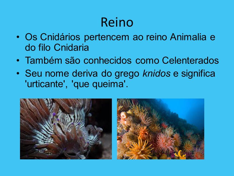 Reino Os Cnidários pertencem ao reino Animalia e do filo Cnidaria