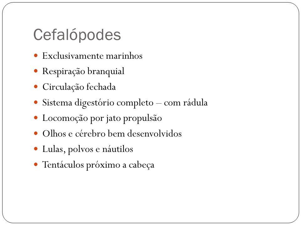 Cefalópodes Exclusivamente marinhos Respiração branquial