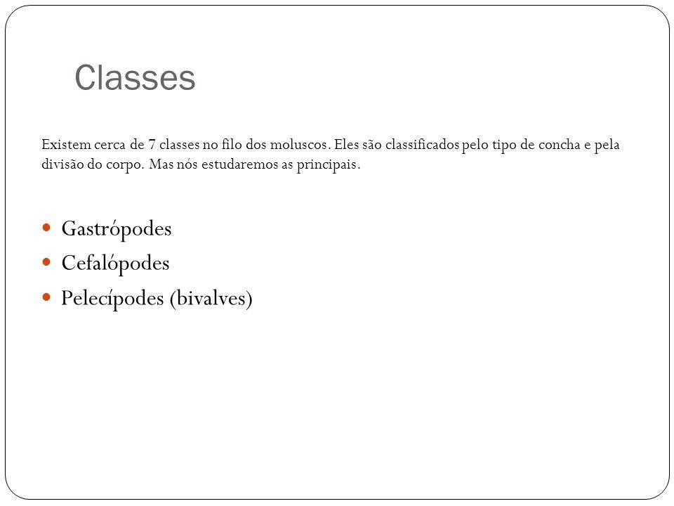 Classes Gastrópodes Cefalópodes Pelecípodes (bivalves)