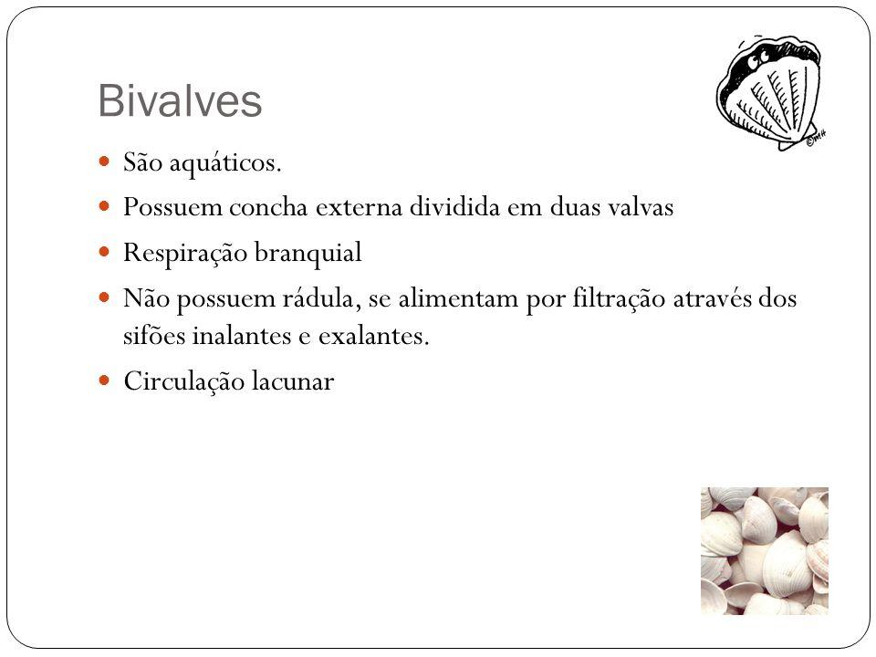 Bivalves São aquáticos. Possuem concha externa dividida em duas valvas