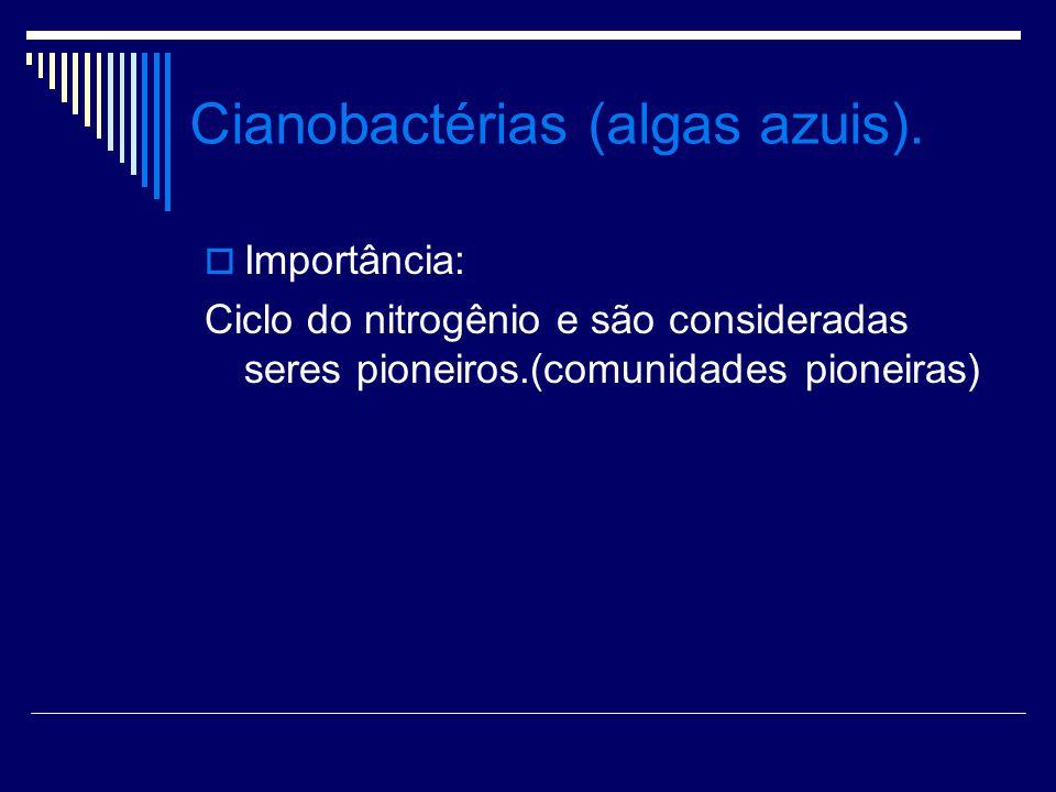 Cianobactérias (algas azuis).
