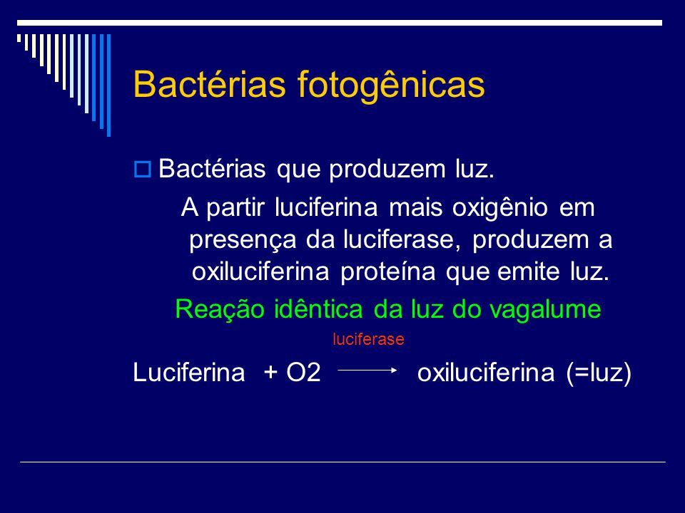 Bactérias fotogênicas